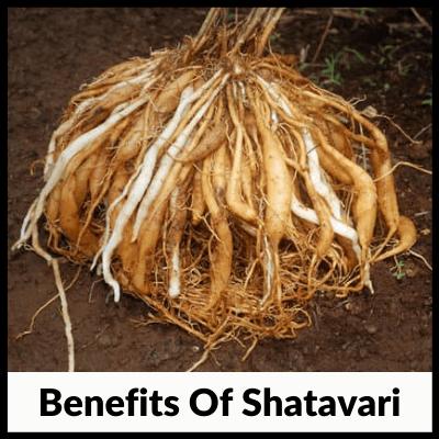 Benefits Of Shatavari, best Shatavari tablets