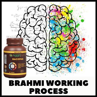 Brahmi working process, Ayurvedic Brahmi Tablets