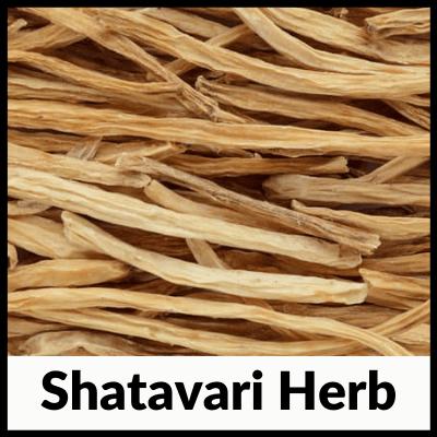 Shatavari Herb, best Shatavari tablets