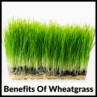 Benefits Of Wheatgrass, Best Wheatgrass Tablets