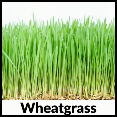 wheatgrass, Best Wheatgrass Tablets