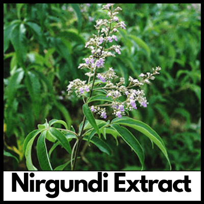Nirgundi Extract, Supplement for Joint Pain