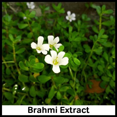 Brahmi Extract, Best Immunity Booster Tablet