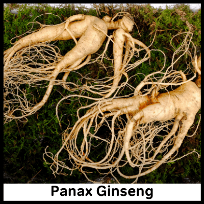 Panax Ginseng extracts and roots
