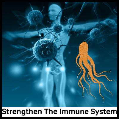 Strengthen The Immune System, Best Panax Ginseng Supplement