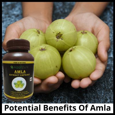 Potential Benefits Of Amla, Pure Amla Extract Capsule
